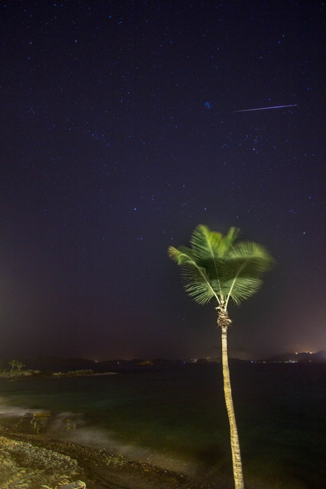 2013 Perseid Meteor and Palm Tree in St. Thomas, US Virgin Islands