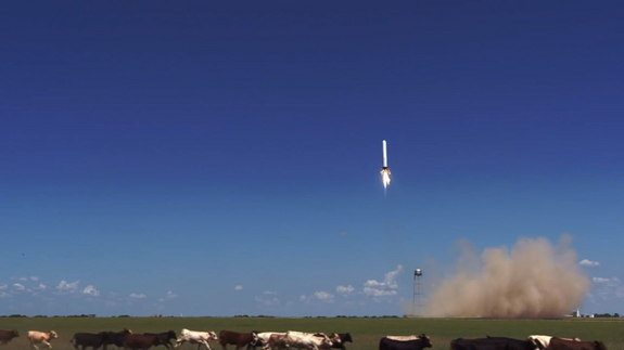 The reusable Grasshopper rocket built by SpaceX flies on an Aug. 14, 2013 test flight, apparently spooking a herd of cows near the McGregor, Texas, rocket proving grounds.