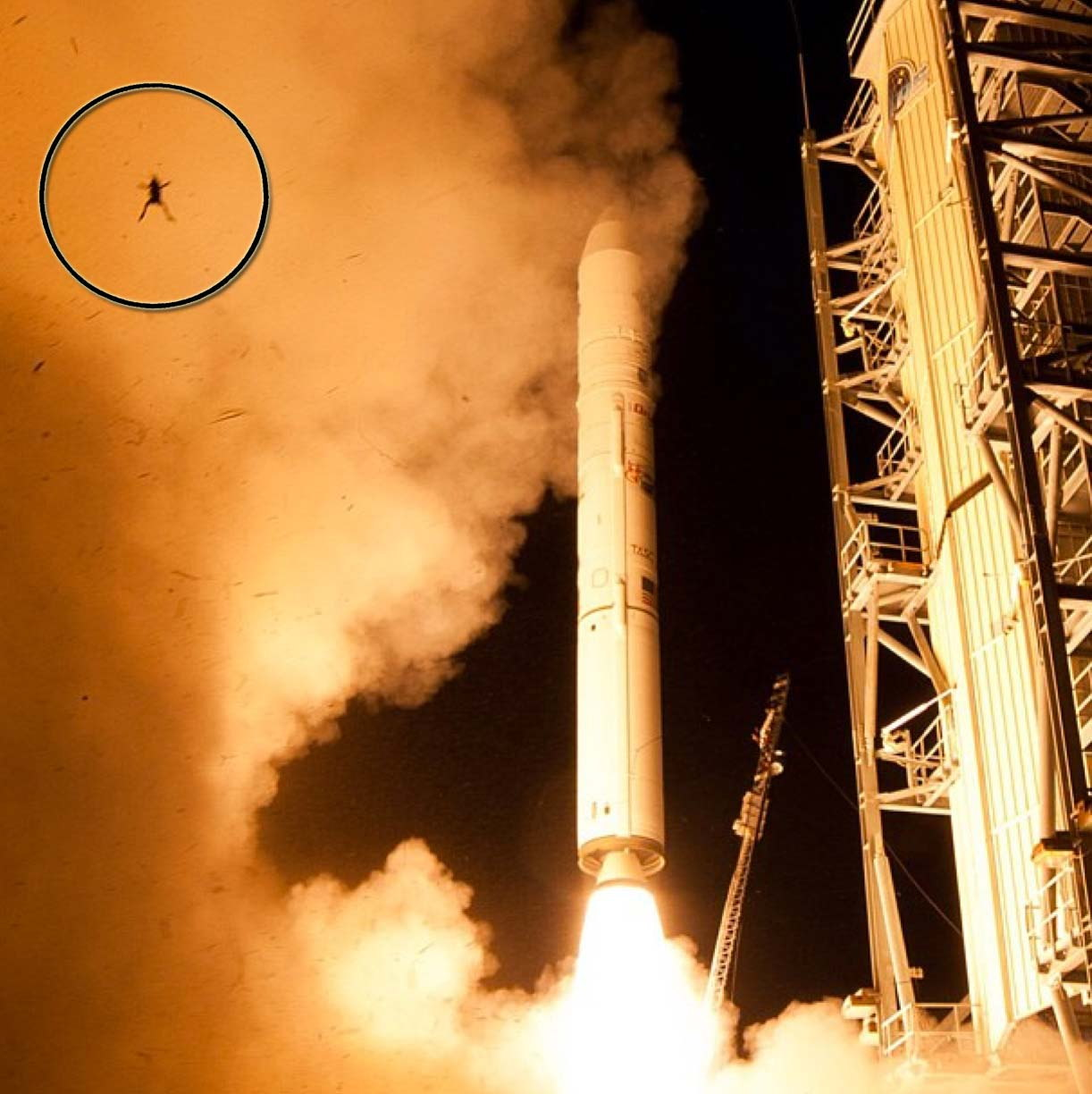 Frog Photobombs NASA Launch
