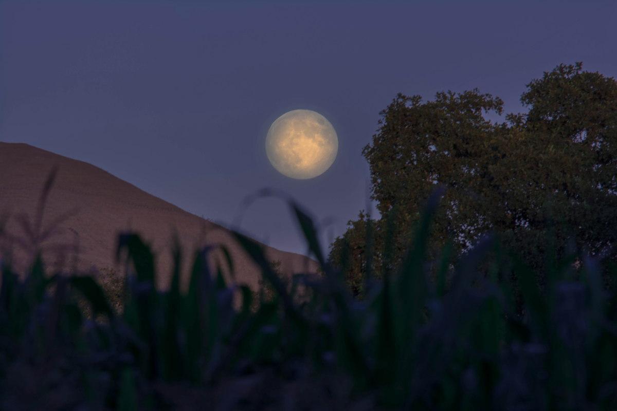 2013 Harvest Moon Over Fremont, CA
