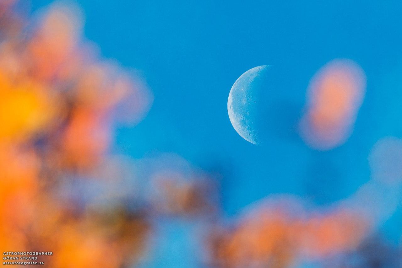 The Autumn Moon Lights My Way