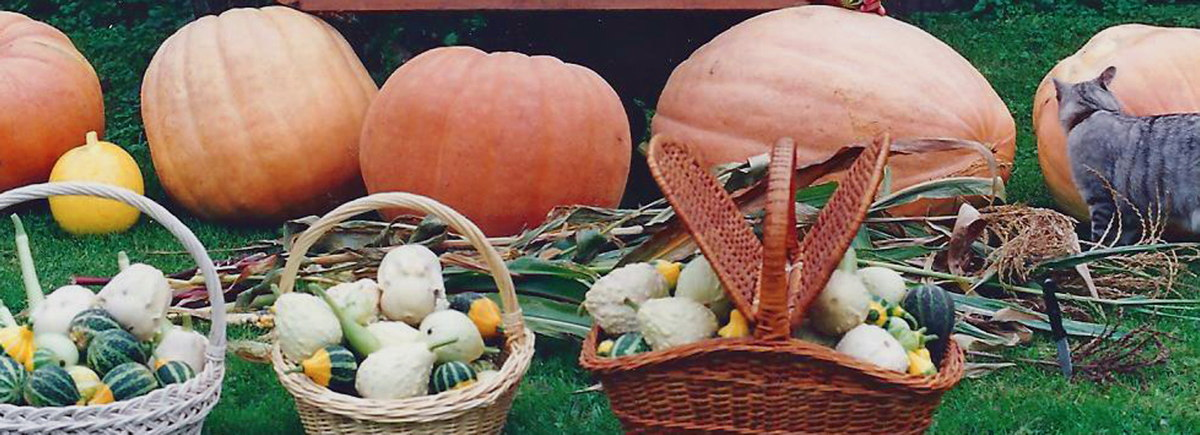 The Raw Materials for 'Astropumpkins'