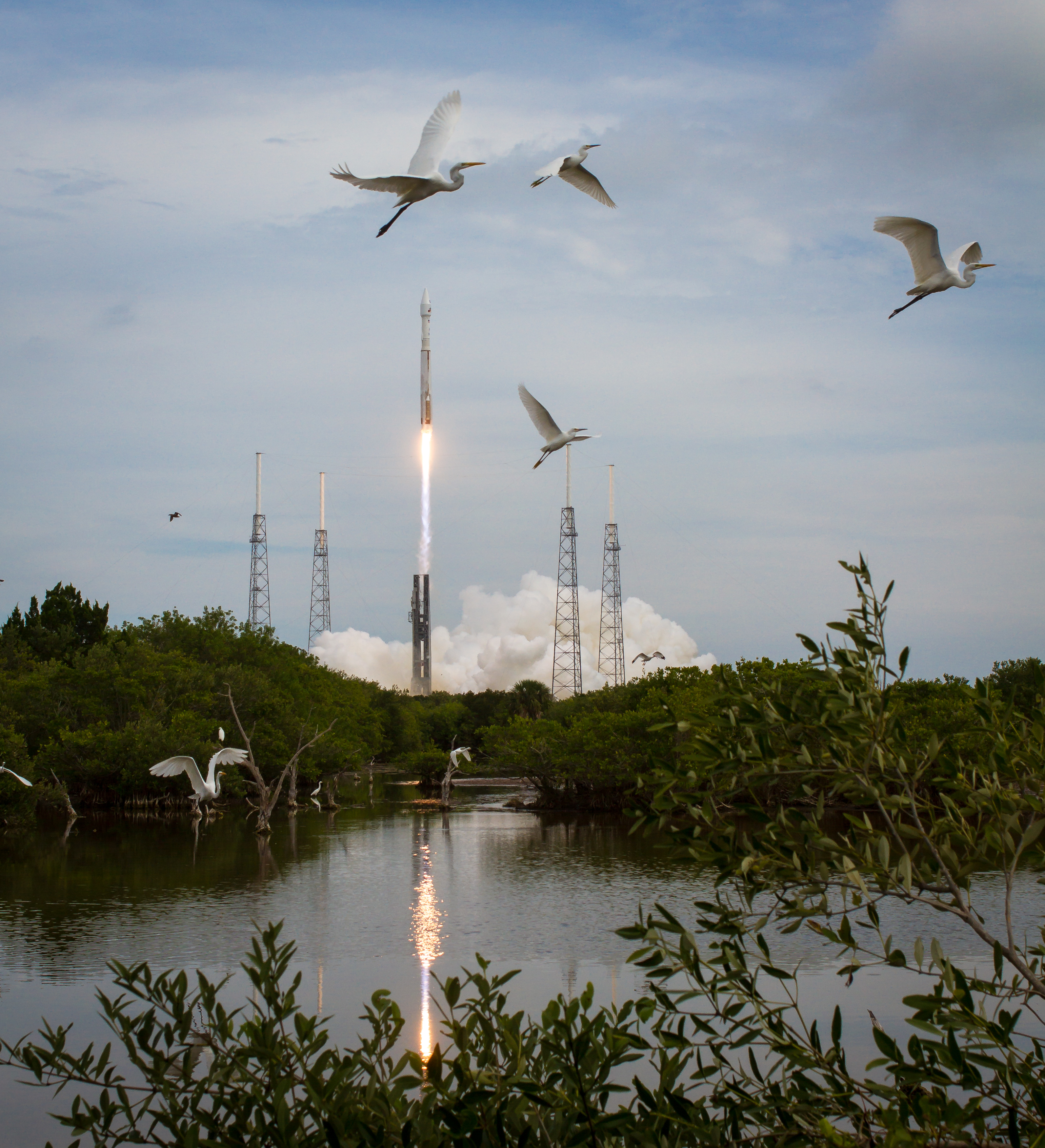 Atlas V and MAVEN Launch: Winged Spectators