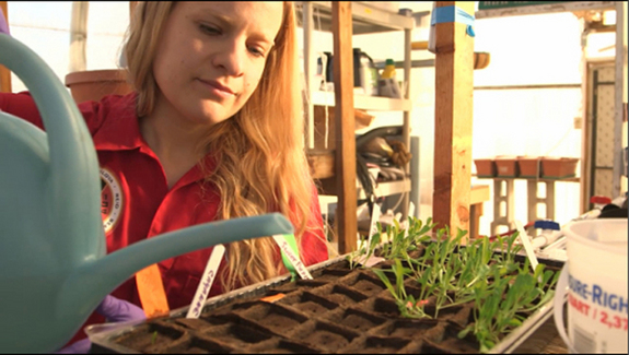 Michaela Musilova, a member of the mock Mars mission Crew 134, works with plants during an experiment at the Mars Desert Research Station habitat in January 2014.