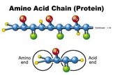 The 20 different amino acids will stick together in various formations to form protein.