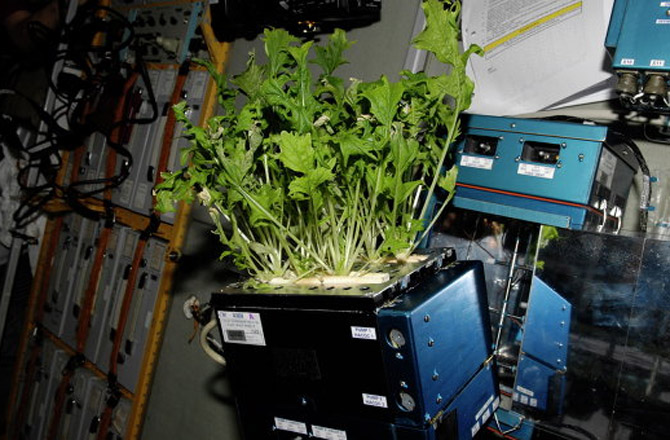 Orbital Farming: Space Station Greenhouse Bears Fruit (Photo)