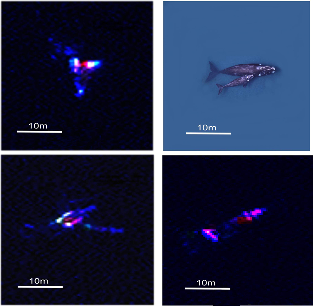 High-Res Satellites Help Track Whale Populations