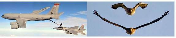 The fighter jet can never be fuel efficient and the refuel aircraft can never be agile. The hawk can morph.