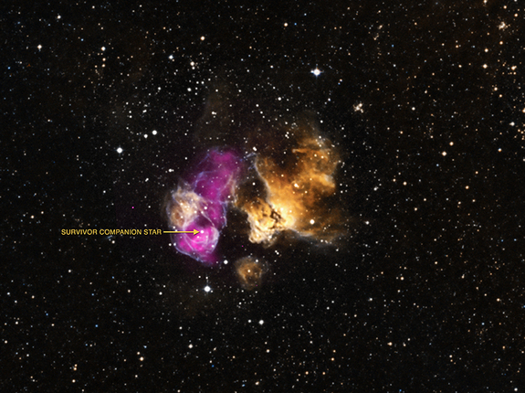 This labeled image shows a star that has survived a nearby supernova explosion in the Large Magellanic Cloud about 160,000 light-years from Earth. The purple is X-ray data from the Chandra X-Ray Observatory, and the yellow and cyan optical light captured by the Magellanic Cloud Emission Line Survey in Chile.