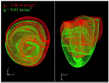 Predicted change in heart shape at end-diastole on Earth (green) and in microgravity (red).