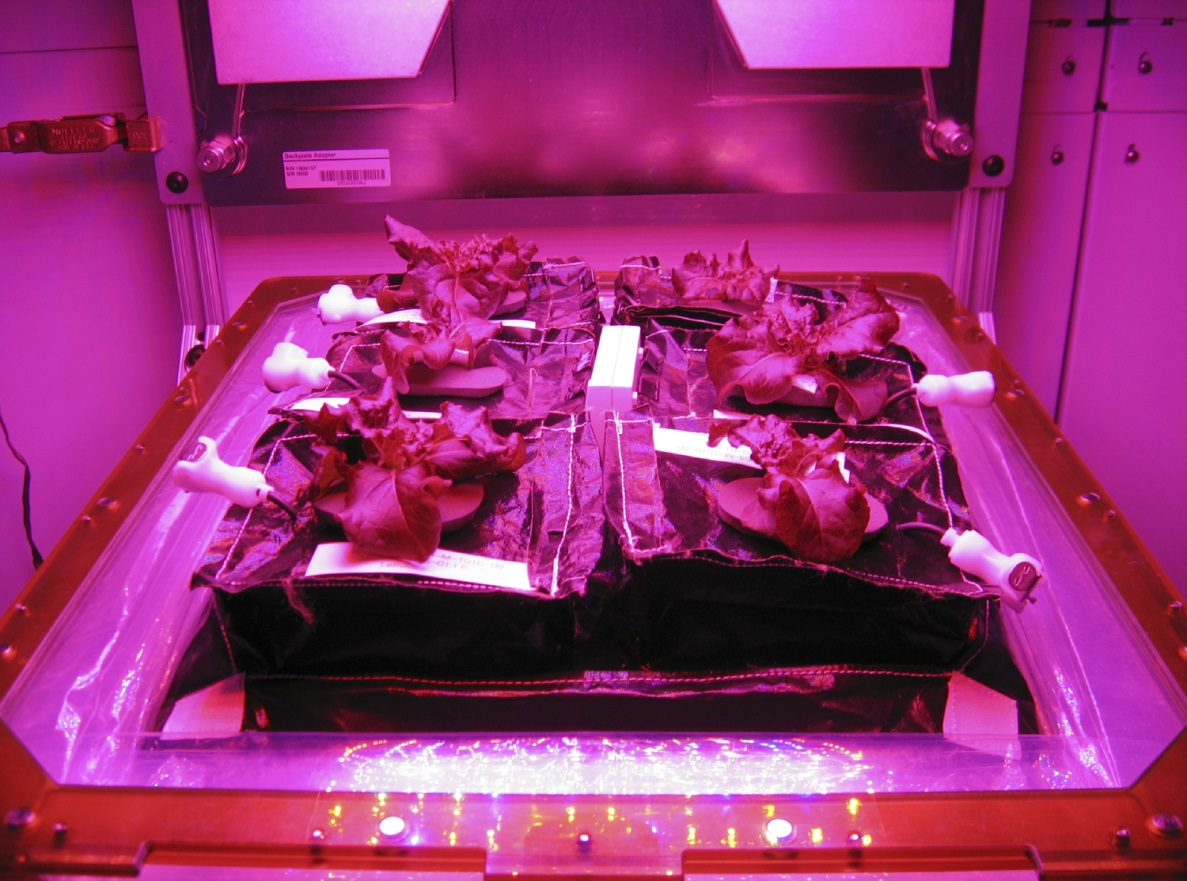 Veggie Growing Experiment, Space Station