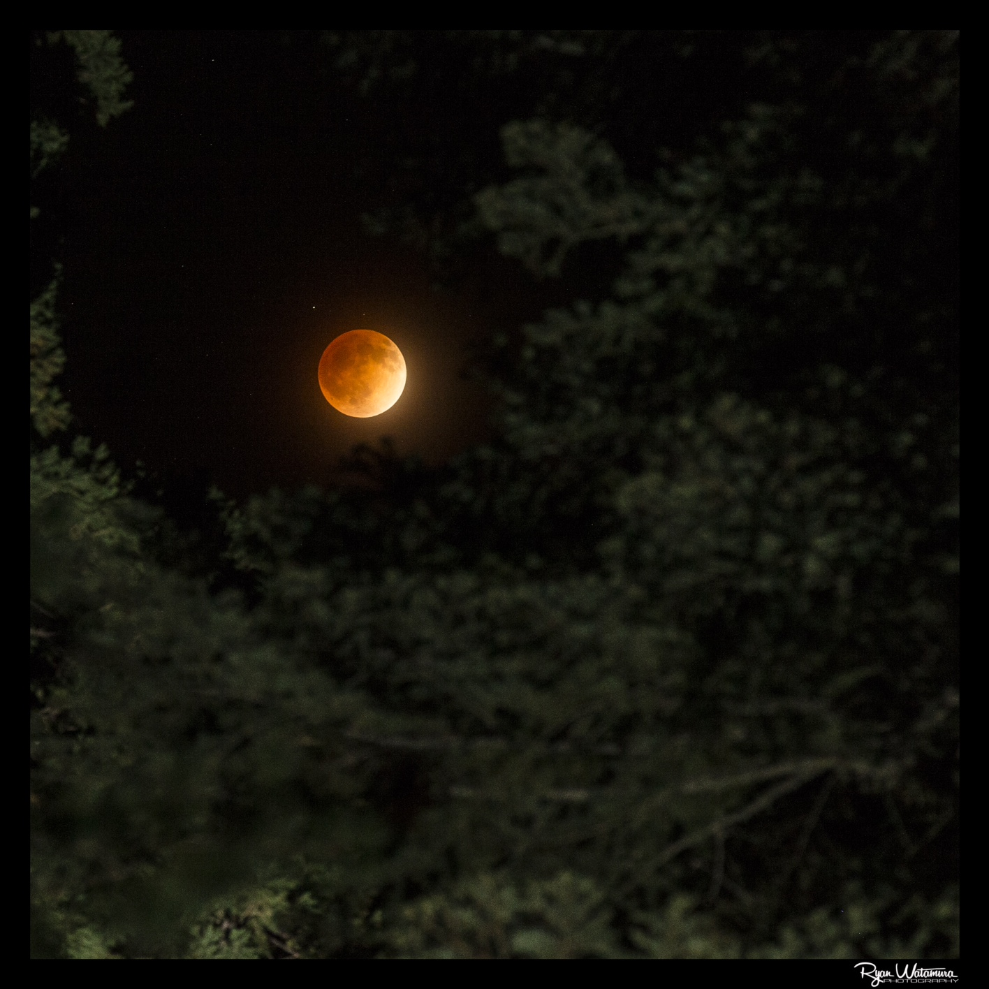 Total Lunar Eclipse from Grant's Grove: Ryan Watamura