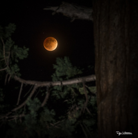 Photographer Ryan Watamura captured this amazing photo of the total lunar eclipse on April 15, 2014 from Grant's Grove in Kings Canyon National Park in California using a Canon EOS 1dx camera, 70-200 2.8L IS II, Canon 600EX-RT flash with a CTO gel.