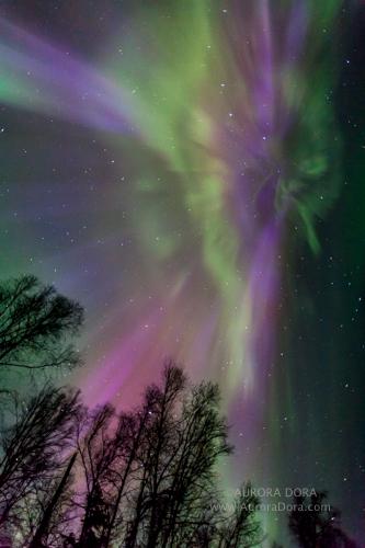 Astrophotographer Dora Miller sent in a photo of an auroral display over Alaska, taken April 20, 2014.
