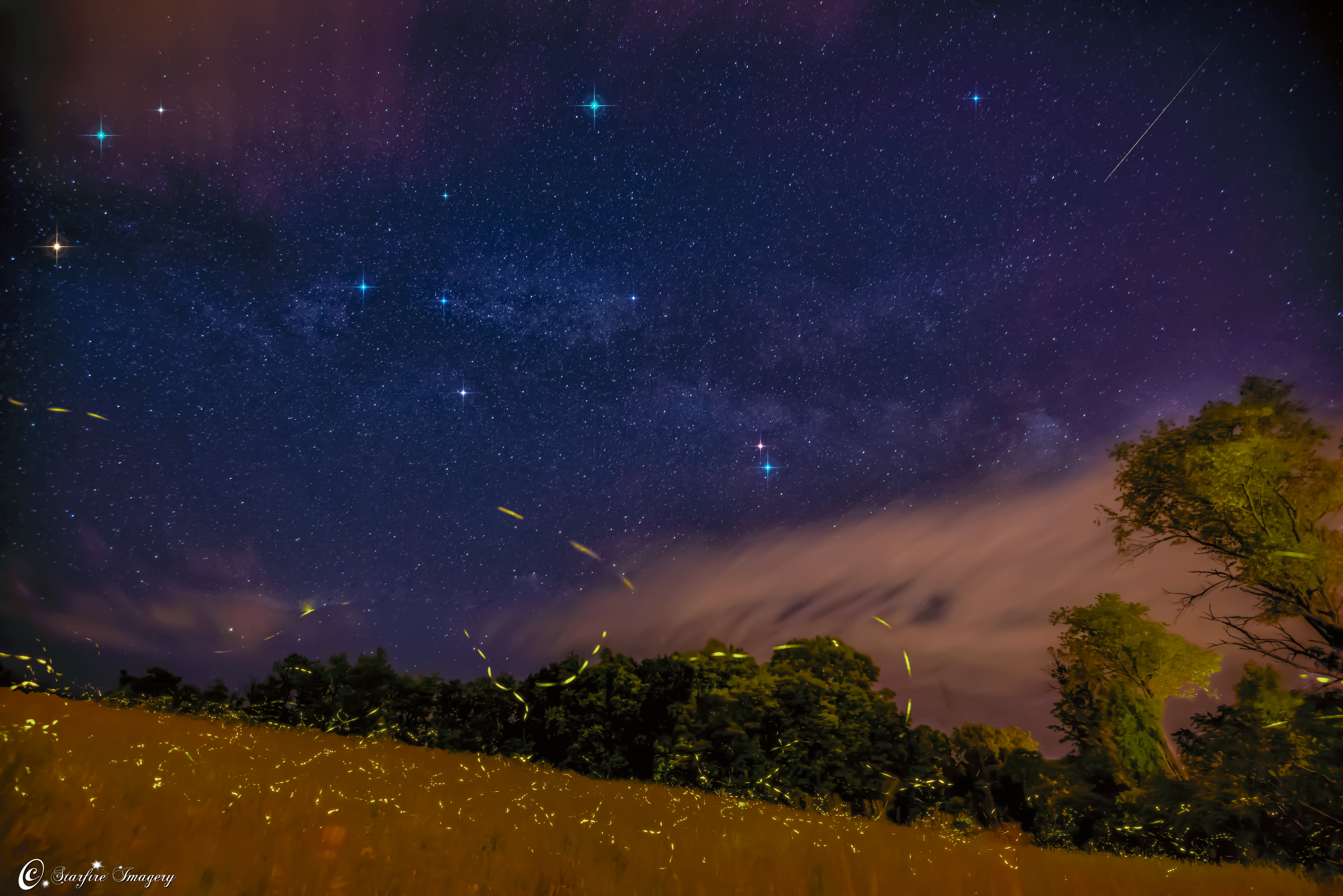 Firefly Trails Under Milky Way Captured by Astrophotographer (Photo)