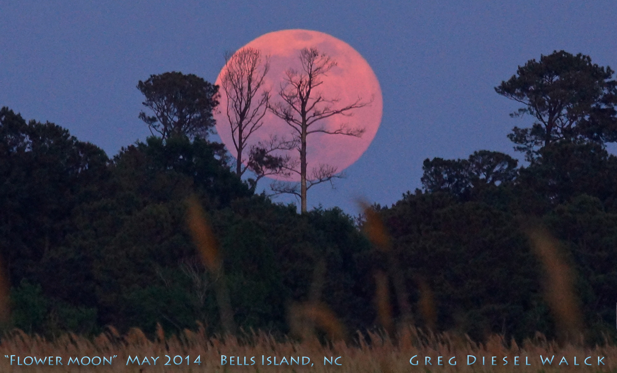 Majestic Full Flower Moon Rises Over North Carolina (Photo)