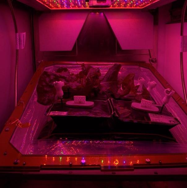 Garden on ISS