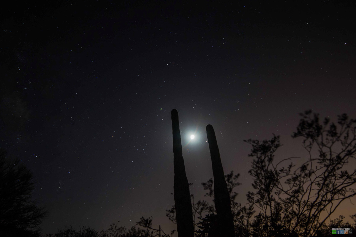 Moon, Saturn, Mars and Cactus