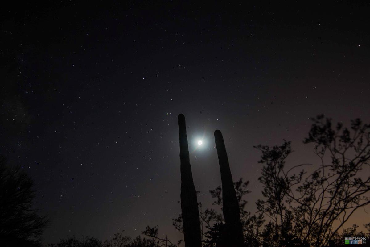 Moon, Saturn, Mars and Cactus