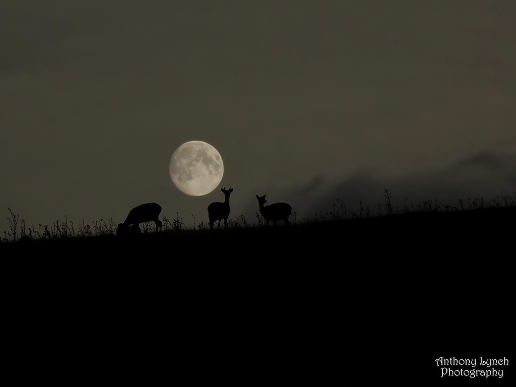 Harvest Full Moon Rises Monday in Summer 'Supermoon' Finale