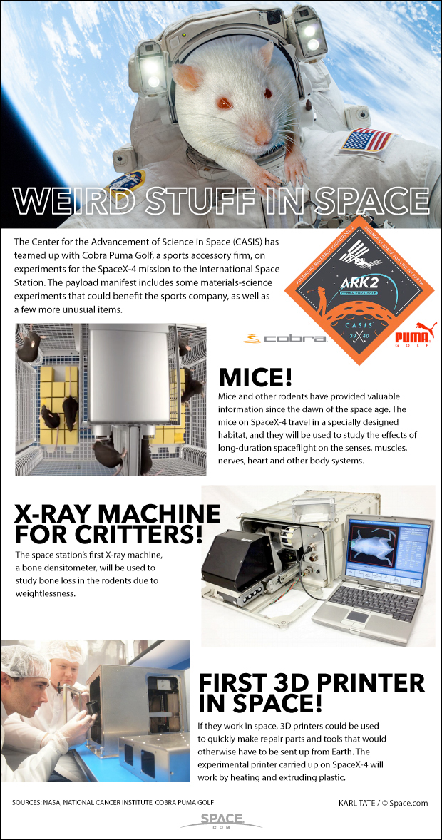 SpaceX Dragon Flying Mice in Space & More for NASA (Infographic)