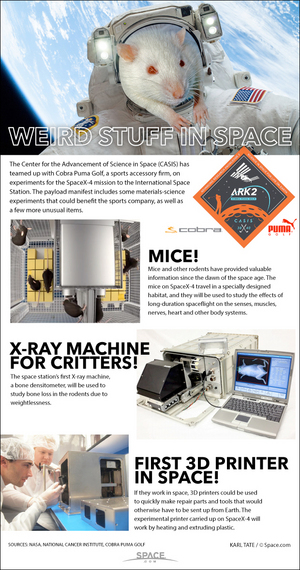 "The SpaceX-4 mission to the ISS will carry aboard some unusual items. <a href=""http://www.space.com/27172-spacex-space-rats-nasa-science-infographic.html"">See how mice, 3d printers and more are riding into orbit in this Space.com infographic</a>."