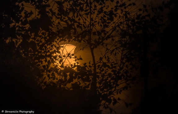 The partial solar eclipse of Oct. 23, 2014 is seen through tree leaves in this stunning photo captured by photographer Shreenivasan Manievannan in South Carolina.