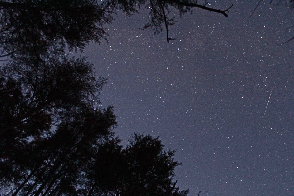 Leonid Meteor Shower Forecast: What to Expect