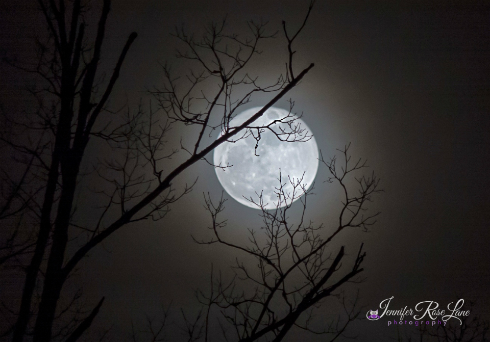 One Wolf Moon