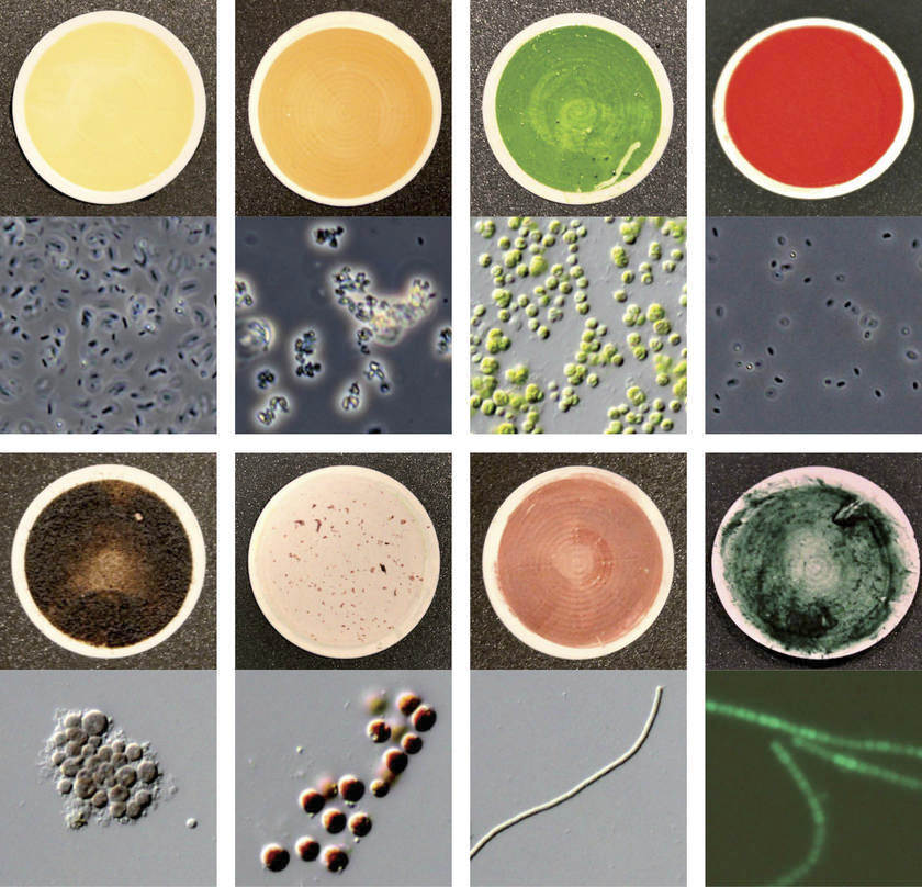 Different Microorganisms Reflect Sunlight