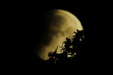 A partial lunar eclipse slips behind trees in this predawn view from Fort Lauderdale, Florida captured by skywatcher A.M. Miller early on April 4, 2015. A total lunar eclipse was visible at other locations on Earth.