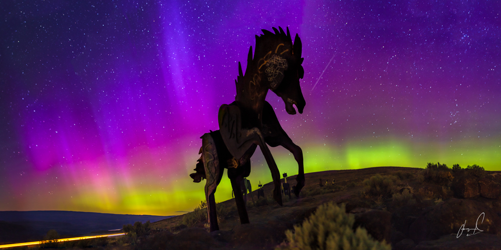 Wild Horses by Matias