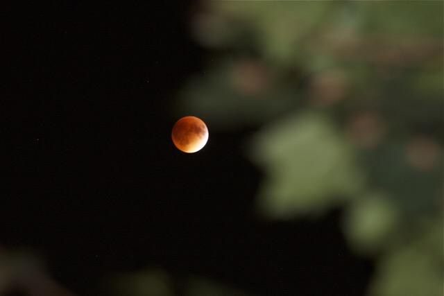 Michigan Engineering Supermoon Eclipse