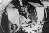 Soviet Union's Sputnik 2 carried the dog, Laika, into Earth orbit in 1957.