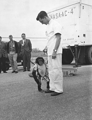 U.S. Mercury program's Ham, the first chimpanzee ever to ride into space in January 1961 is shown off by his animal trainer at Cape Canaveral, Florida.