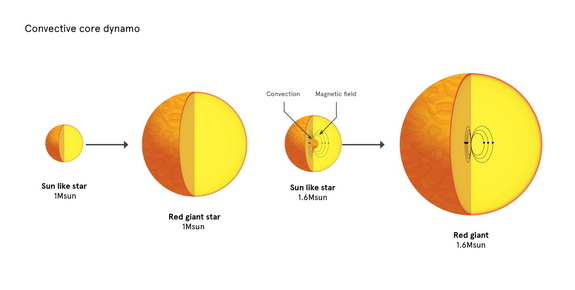 Red-giant stars just slightly more massive than the sun hide strong magnetic fields in their cores because of the way convection operates.
