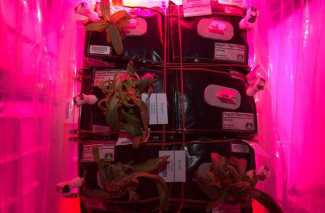 Space Fungus! Mold Attacks Space Station Plants