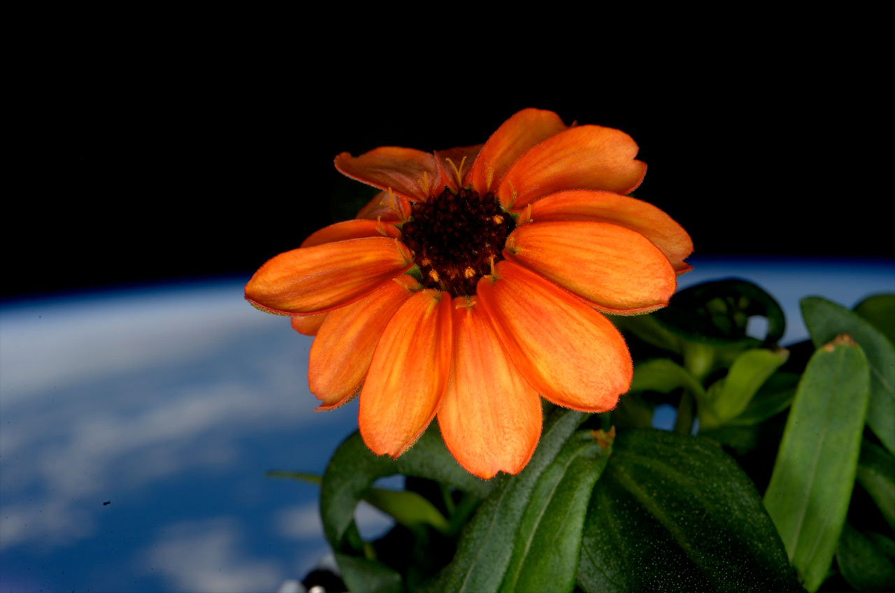 Space Station's 1st Flower