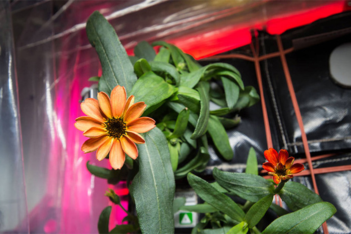 How This Flower Was Saved From Space Station Mold