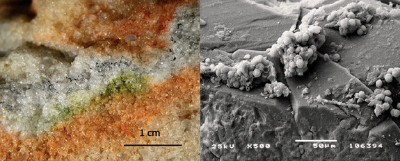 Section of rock colonised by cryptoendolithic microorganisms and the Cryomyces fungi in quartz crystals under an electron microscope.