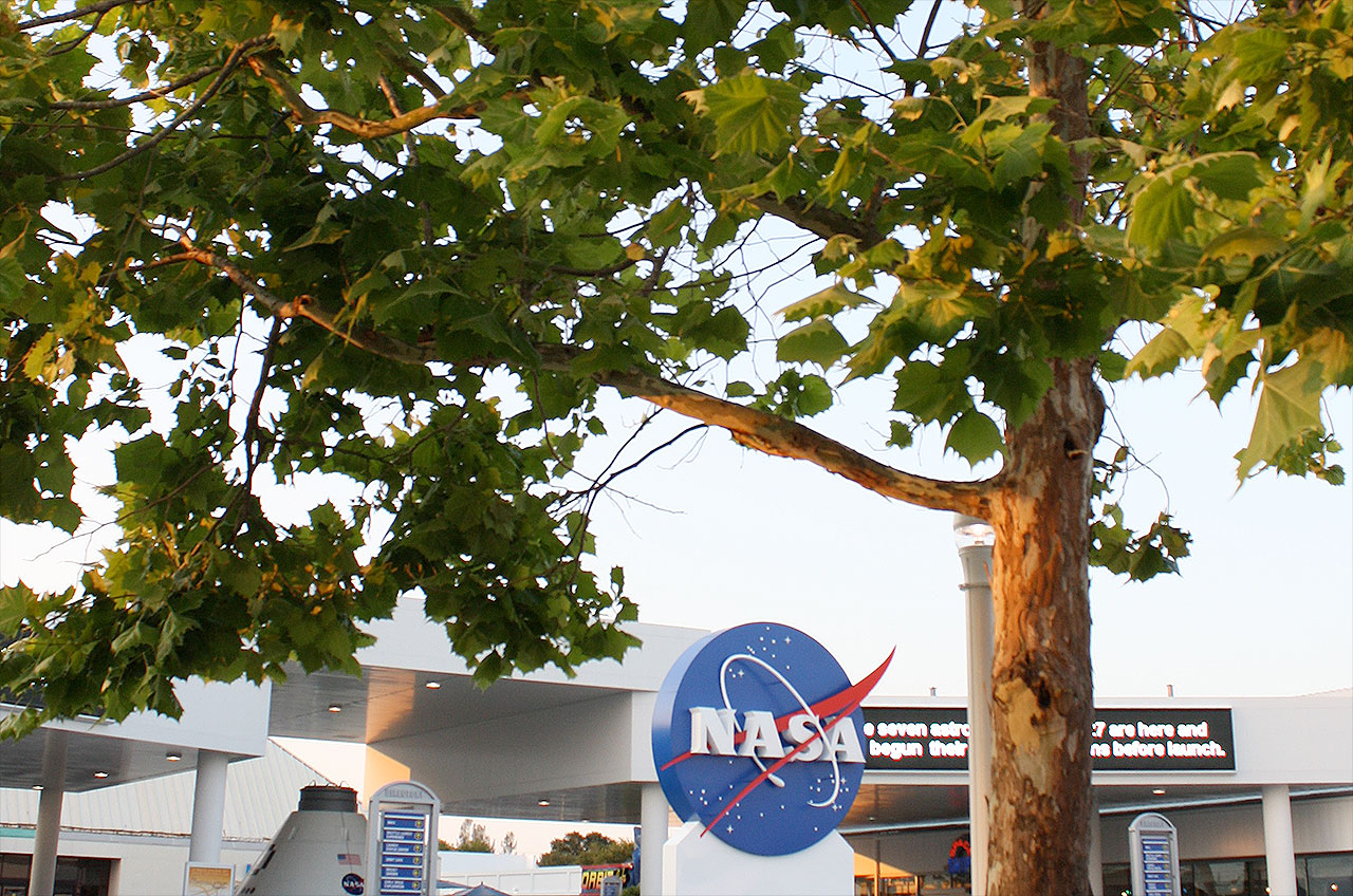 Moon Tree at NASA's Kennedy Space Center