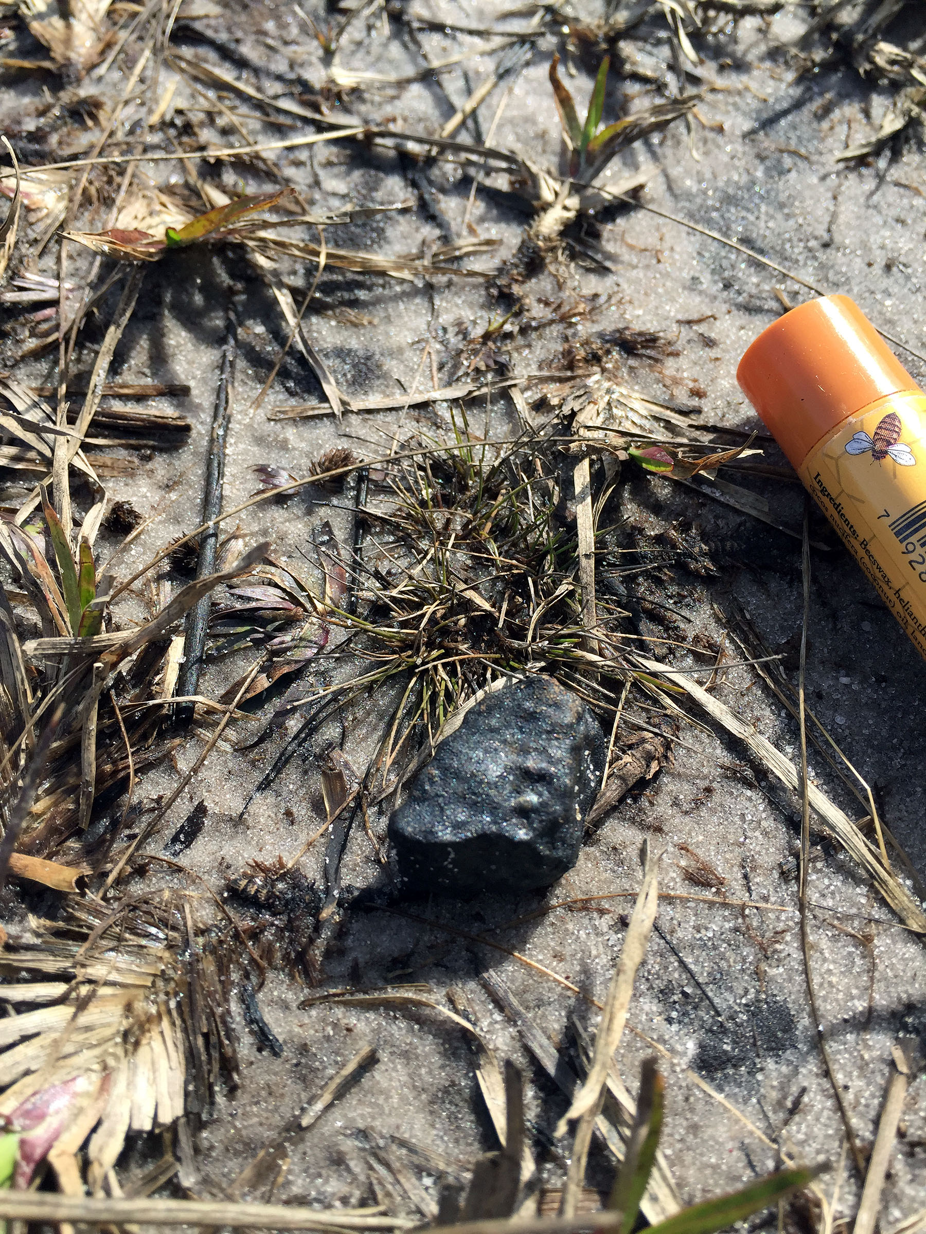 Meteorite Hunters Find 6 Space Rocks from Florida Fireball