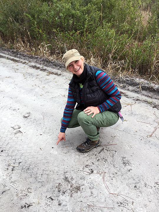 Third Osceola Meteorite Find