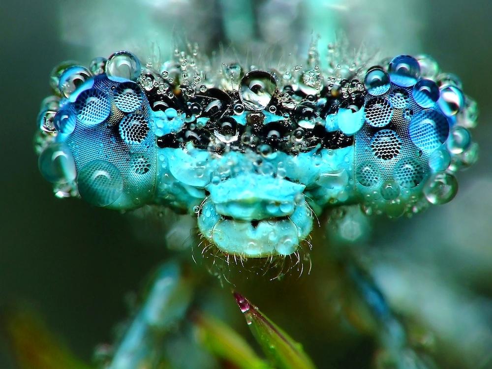 Writing Sci-Fi? First Understand How Elephants Aren't Dragonflies (Op-Ed)