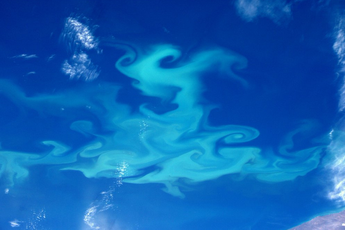 Plankton Bloom Over Patagonia