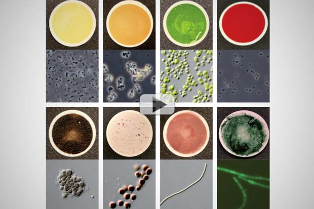 Colors Of Alien Life May Be Key To Finding Them | Video