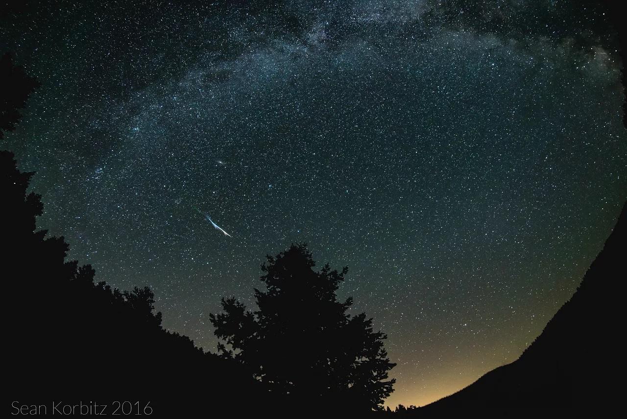 A short streak of light appears in the starry sky framed by trees