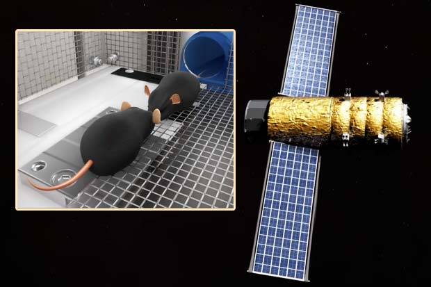 Artificial Gravity In Space For Mice? Multi-Generational Study Concept | Video