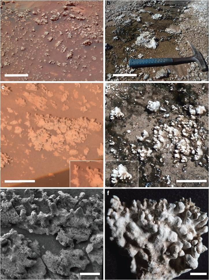 Did NASA Mars Rover Find a Signature of Past Life?