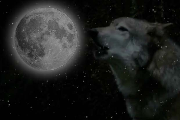 Wolf Moon - What Is It? When Does It Occur? | Video
